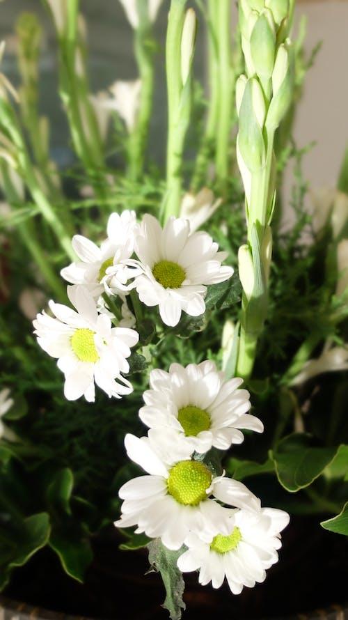 Foto d'estoc gratuïta de flor de color blanc