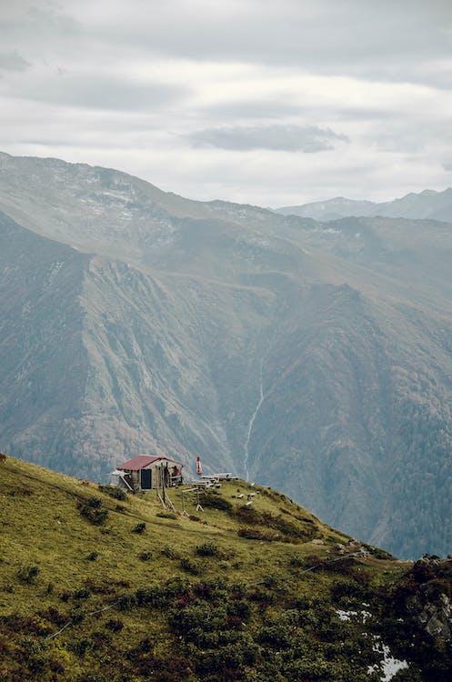 altitude, arbres, beau paysage
