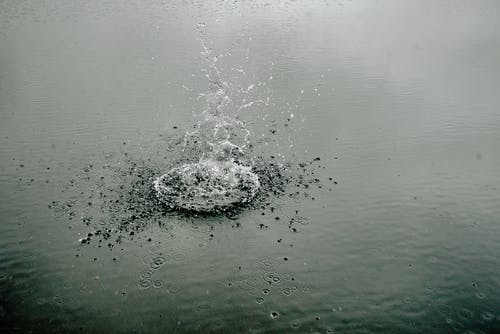 H2O, 天性, 專注, 戶外 的 免费素材照片