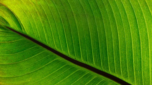 Free stock photo of background, close-up, green, leaf