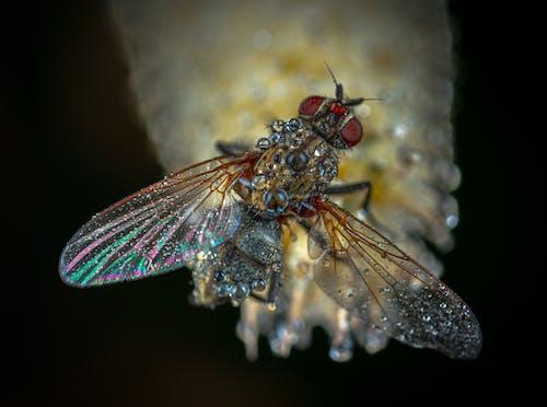 Fotobanka sbezplatnými fotkami na tému hmyz, krídla, kvapky vody, lietať