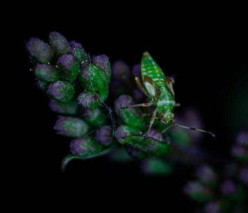 Fotobanka sbezplatnými fotkami na tému hmyz, kvet, makro