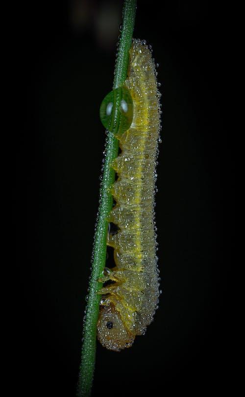 Fotobanka sbezplatnými fotkami na tému hmyz, húsenica, kvapky vody, makro