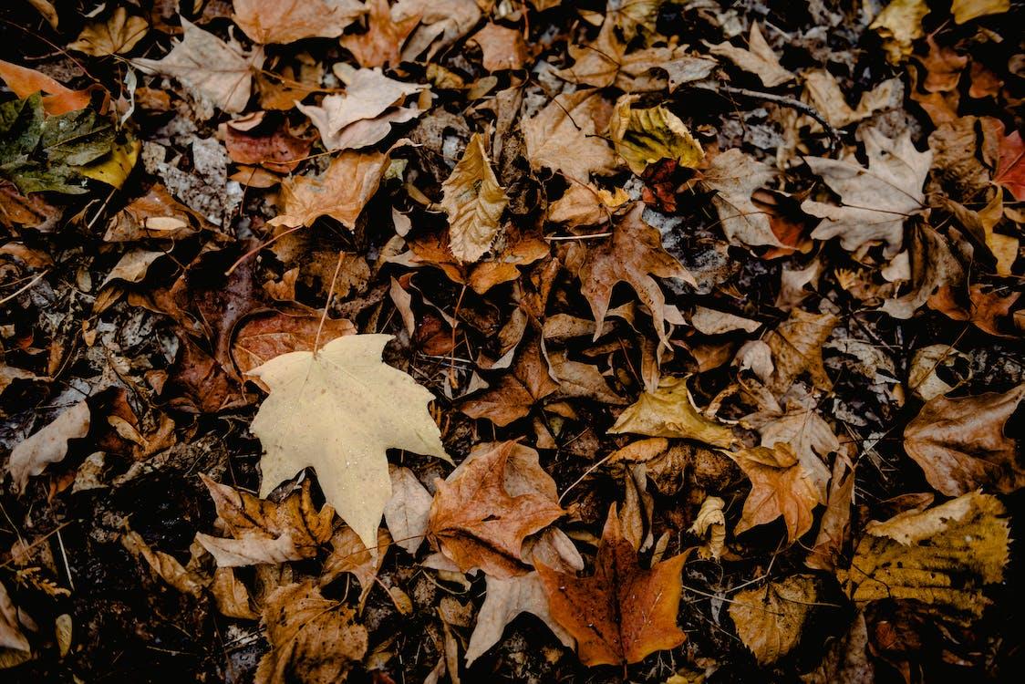 барвистий, великий план, висушене листя