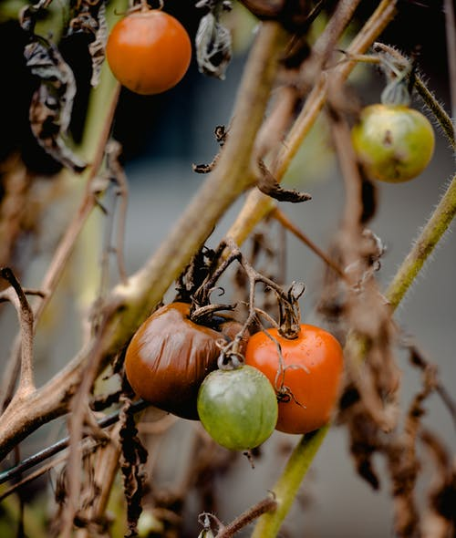 Fotos de stock gratuitas de agricultura, al aire libre, árbol, comida
