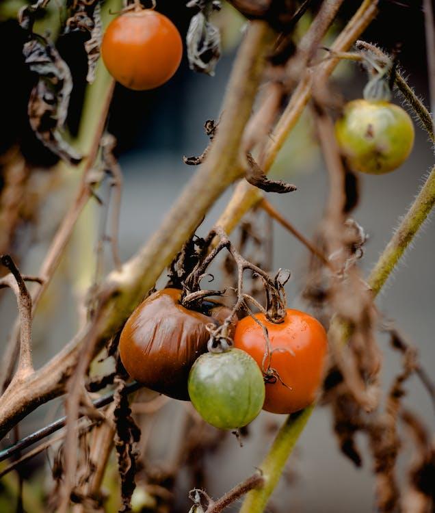 a l'aire lliure, agricultura, arbre