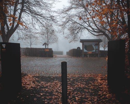 Kostenloses Stock Foto zu herbst, herbstfarbe, nebel, unheimlich