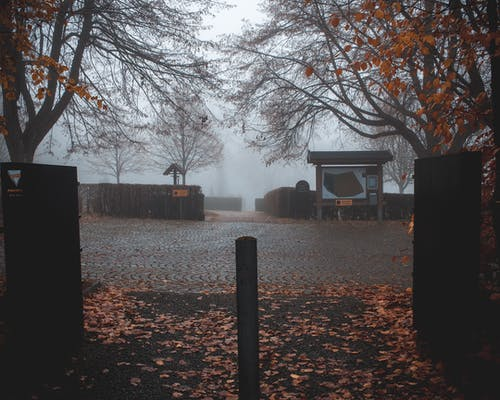 Free stock photo of autumn, autumn color, fog, scary