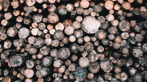 Imagine de stoc gratuită din lemn, lemn tăiat, natură