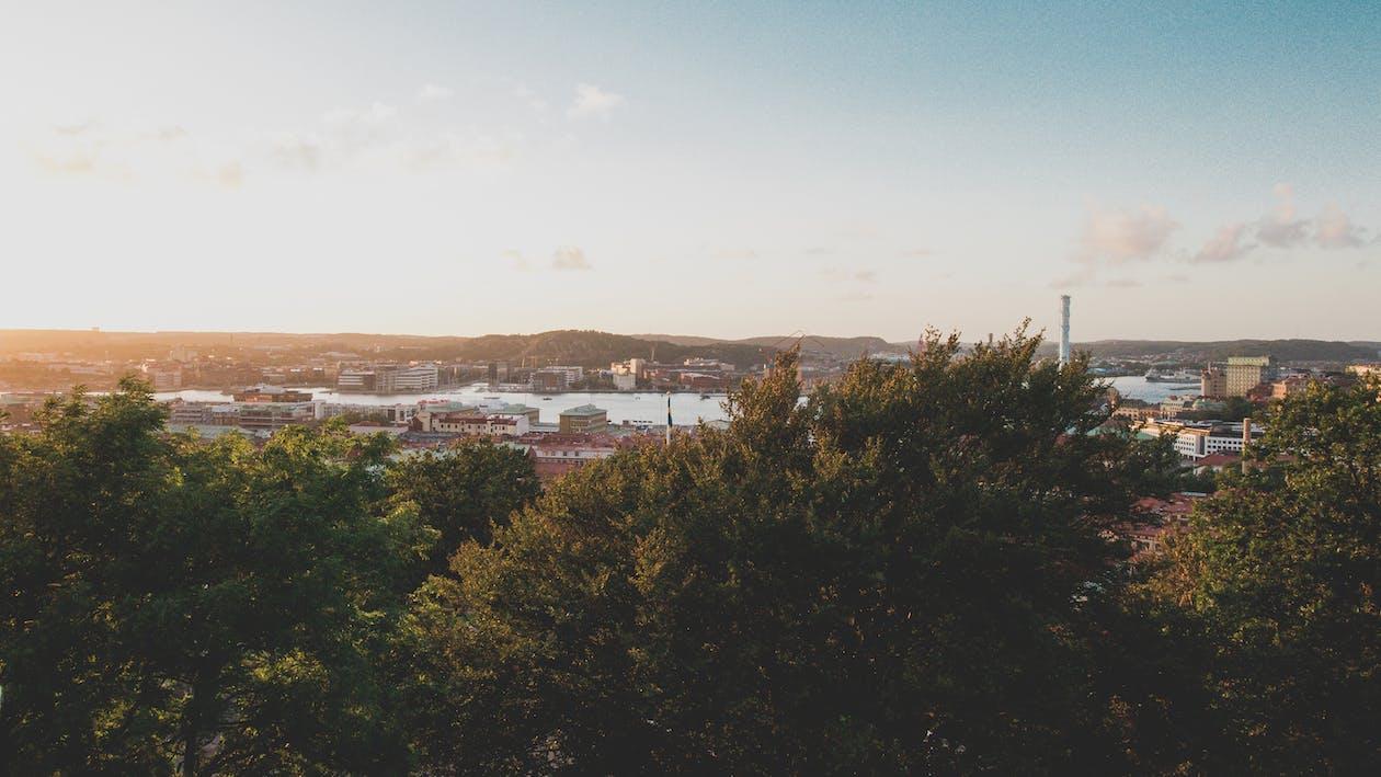 beatiful landscape, summer, trees
