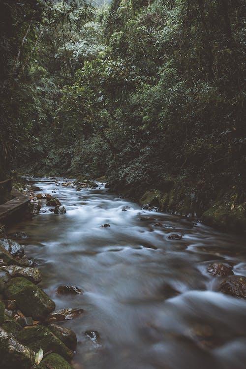 Бесплатное стоковое фото с вода, деревья, длинная экспозиция, дневной свет