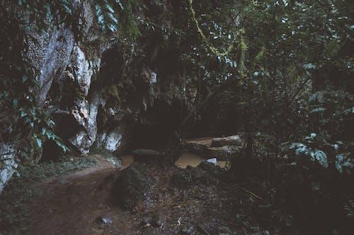 Kostnadsfri bild av dagsljus, falla, flod, fors