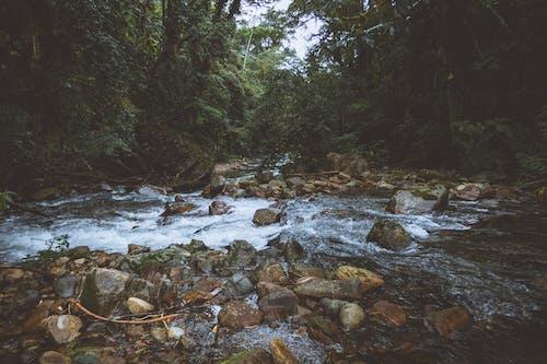 Бесплатное стоковое фото с валуны, вода, деревья, длинная экспозиция