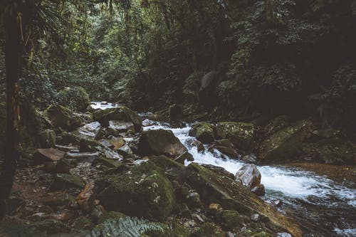 Kostnadsfri bild av bäck, dagsljus, falla, flod