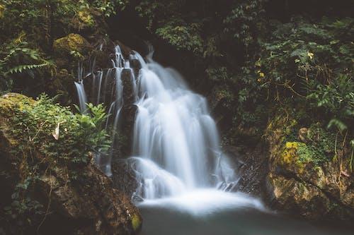 タイムラプス, フロー, 夜明け, 小川の無料の写真素材