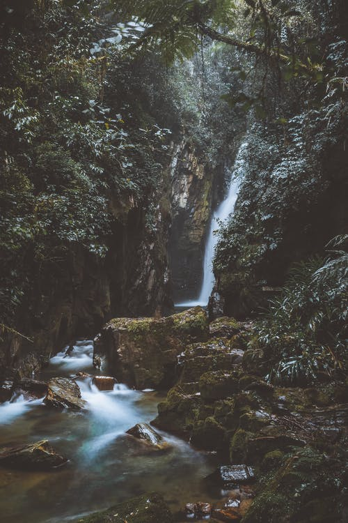 Waterfall on the Forest