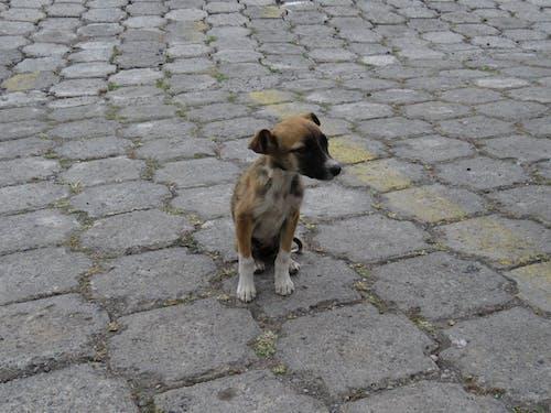 Free stock photo of dog, homeless, sad