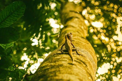 açık hava, ağaç, ağaç gövdesi, ahşap içeren Ücretsiz stok fotoğraf