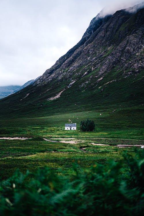 Foto profissional grátis de ao ar livre, árvores, campina, casa