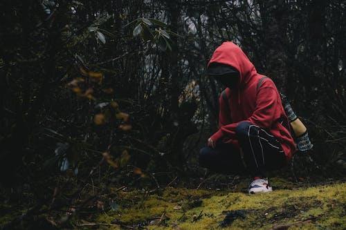 秋天, 黑森林 的 免费素材照片
