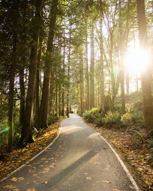 Photos gratuites de arbres, aube, brouillard, campagne