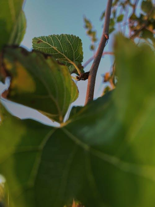 arka ışık, gün ışığı, güz yaprakları, yeşil içeren Ücretsiz stok fotoğraf