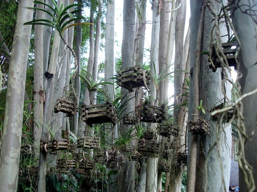 Gratis stockfoto met bomen, Bos, natuurpad