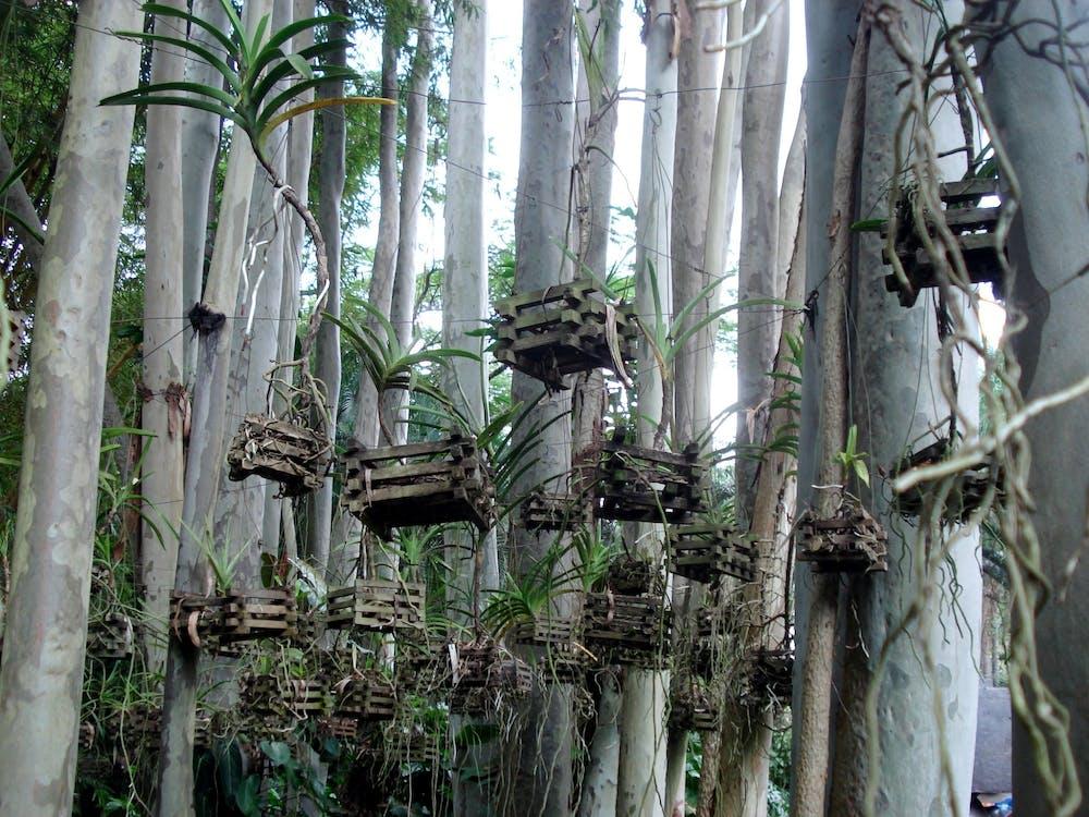 дерева, ліс, стежка на природі