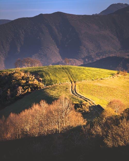 下田, 丘陵, 增長, 天性 的 免費圖庫相片