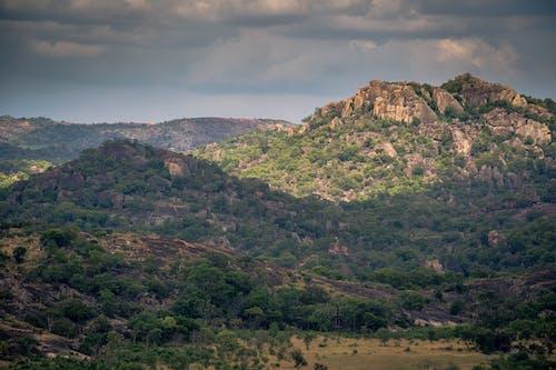 Darmowe zdjęcie z galerii z afryka, matka natura, park narodowy