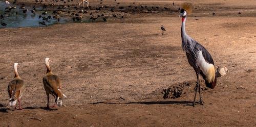 Fotos de stock gratuitas de animal, aves, mirando, safari