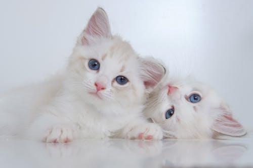 Gratis stockfoto met aanbiddelijk, beest, blauwe ogen, broer