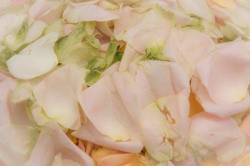 Immagine gratuita di estate, fiori, giardino, petali