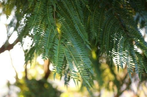 Základová fotografie zdarma na téma listy, příroda, strom, vesnice