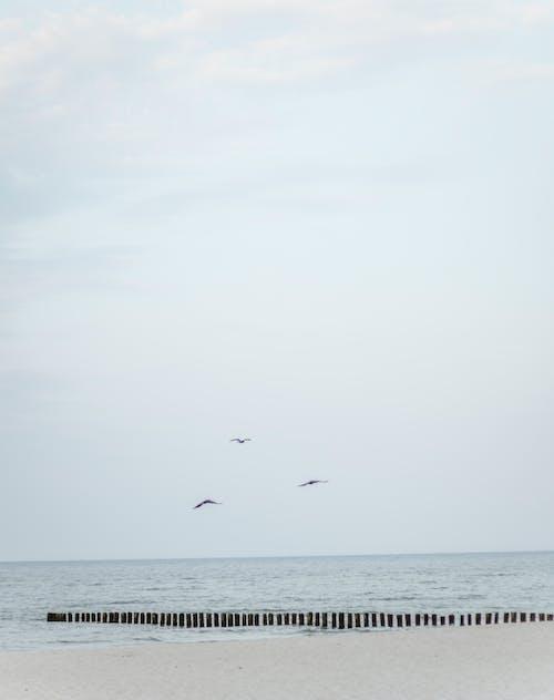 Бесплатное стоковое фото с берег моря, волны, живописный, идиллический