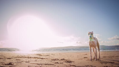 Photo Of Dog Standing On Seashore