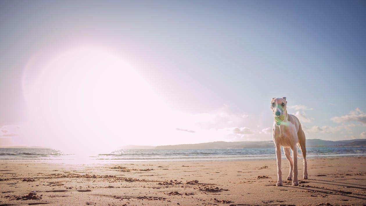 Photo Of Dog Standing On Seashore