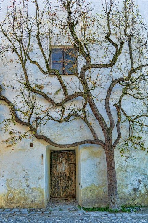 açık hava, ağaç, ahşap, bağbozumu içeren Ücretsiz stok fotoğraf