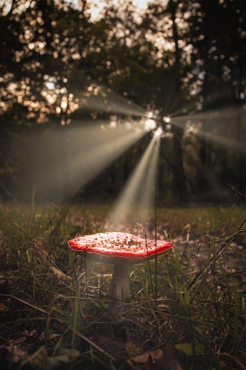Free stock photo of forest mushroom, mushroom