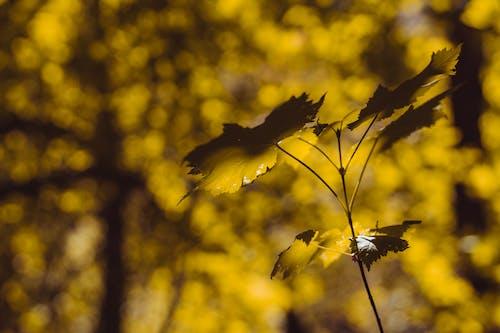 Free stock photo of autumn, fall, leaf