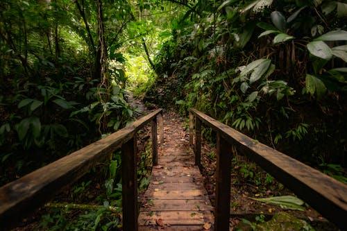 Foto stok gratis alam, hutan, jembatan, keindahan di alam