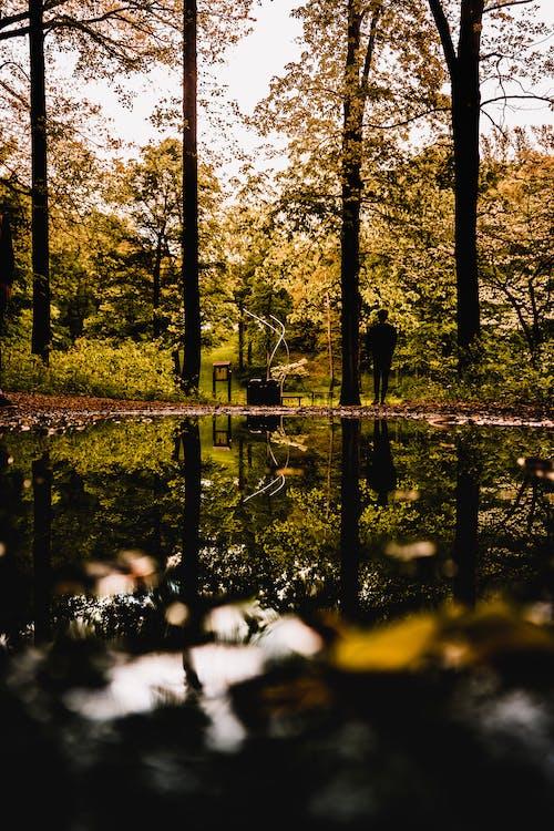 açık hava, Ağaç dalları, ağaç gövdeleri, ağaçlar içeren Ücretsiz stok fotoğraf