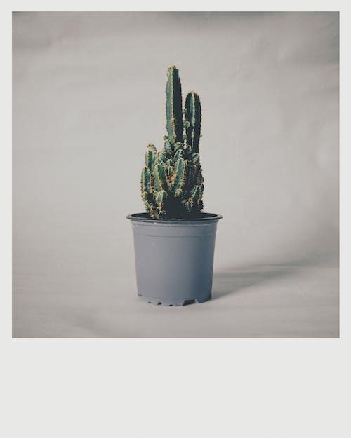 Imagine de stoc gratuită din botanic, cactus, cactuși, ceaun