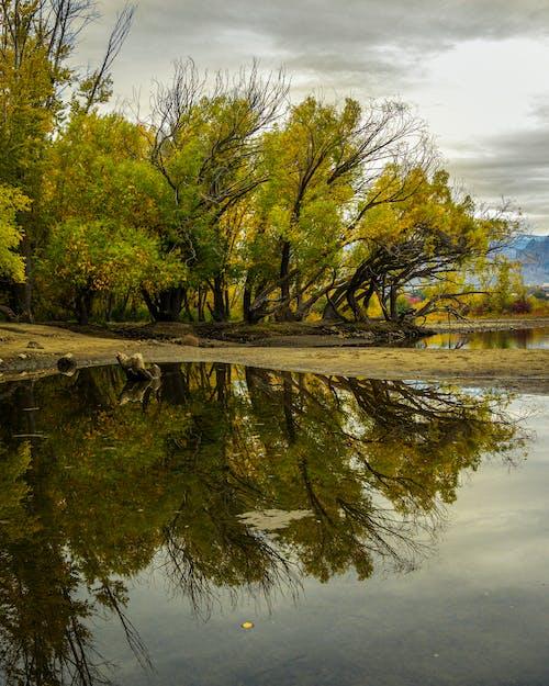 Бесплатное стоковое фото с осенний цвет, отражение