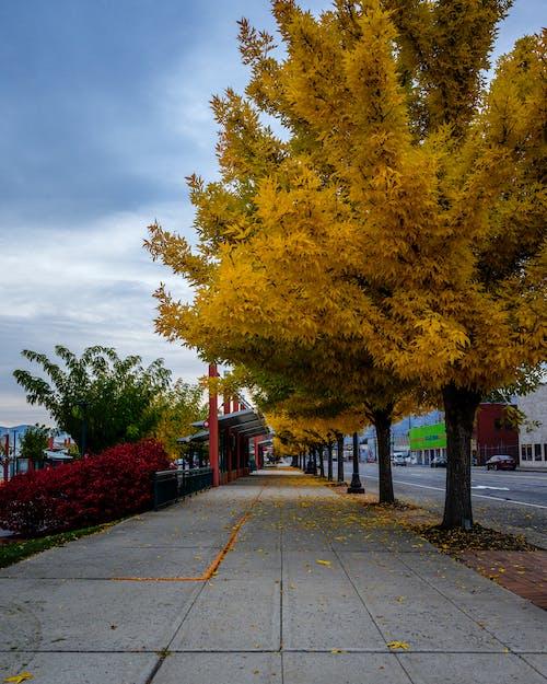 Бесплатное стоковое фото с осенний цвет, улица