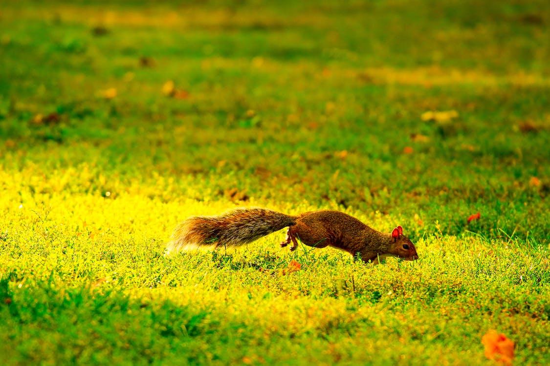 fotografia da vida selvagem