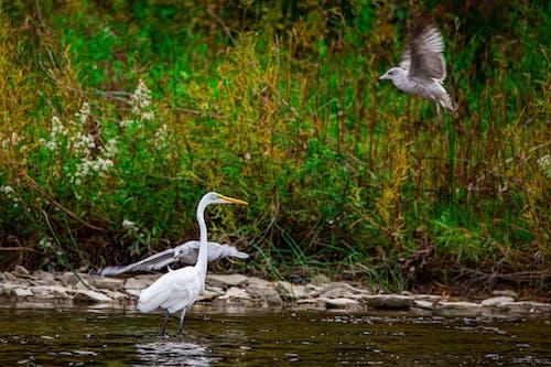 Foto profissional grátis de fotografia da vida selvagem