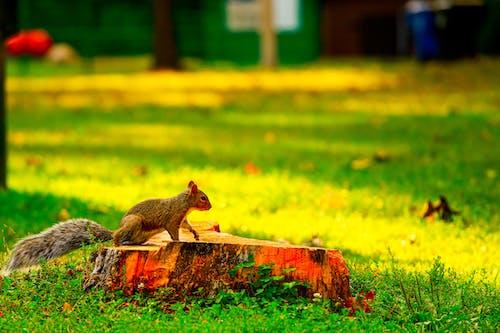 Foto profissional grátis de animais selvagens