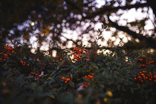 Photos gratuites de automne, bokeh, brouiller, feuilles