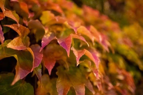 Photos gratuites de arbre, automne, bokeh, brouiller
